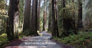 Northern California Road Trip Guide